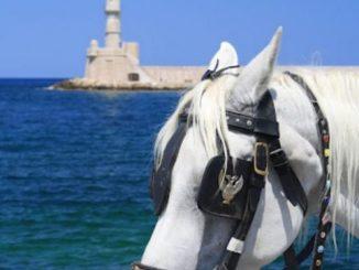 港にいた馬