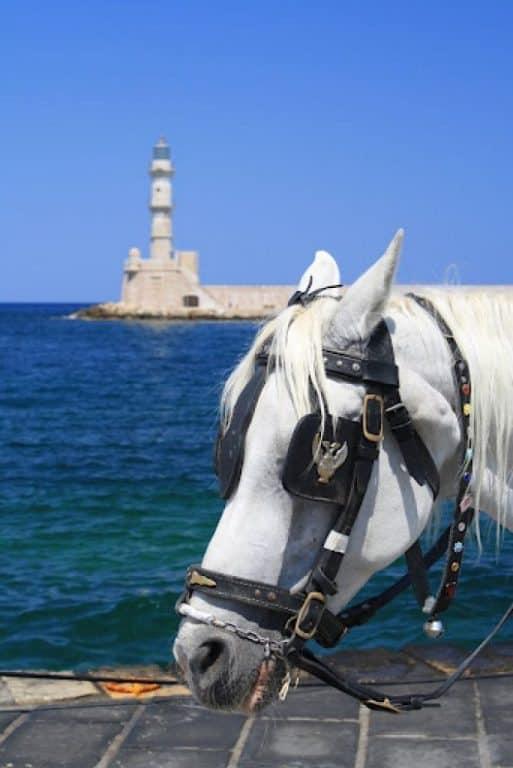 Crete – horse in port