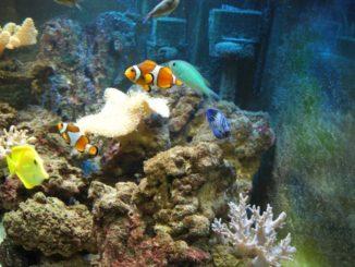 水面下の世界