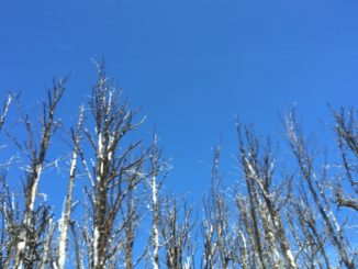 border – blue sky, Dec.2015