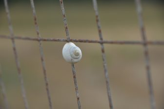 Italy-Sardinia-Alghero-agriturismo-Barbagia-white snail