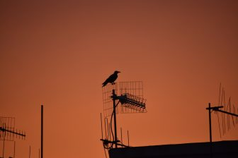 Italy-Sardinia-Alghero-sunset-aerials-crow
