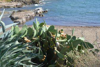 mar-playa-Cerdeña-Alghero-Italia