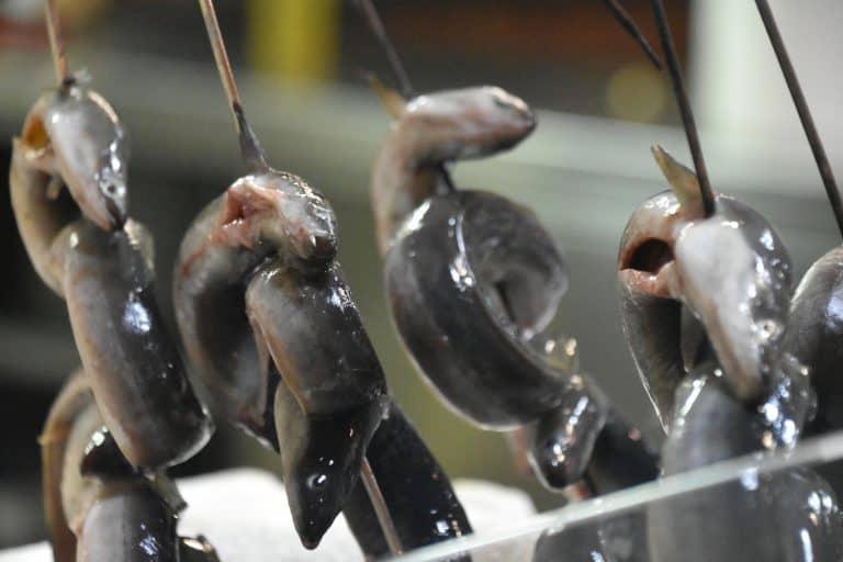 Anguilas en Alghero