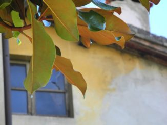 Italy, Arezzo – leaves and window, Nov.2014