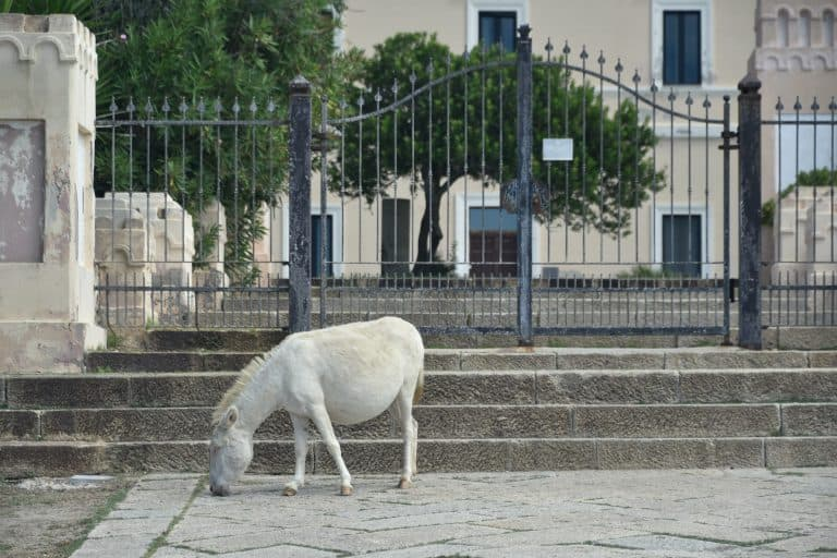 nature on Asinara Island