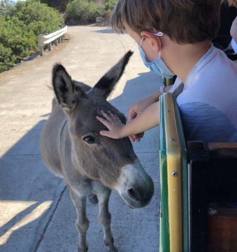 Burro-Asinara-Isla-Burros-Animales-excursion-Cerdeña