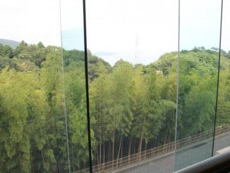Japan, Atami – bamboo forest, Aug.2014