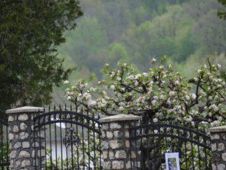 Romania, Cozia Monastery – fence and blossoms, Apr. 2014