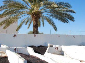 Tunisia, Djerba – carpet, Dec.2008