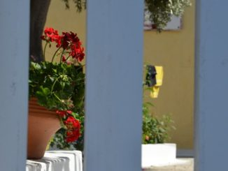 Greece, Santorini, Fira – flower pot, Aug. 2013