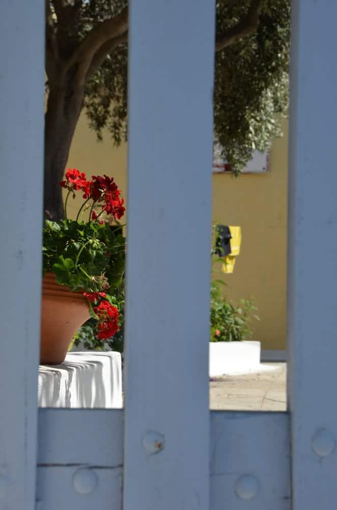 Greece, Santorini, Fira – flower pot, Aug. 2013 (Santorini)