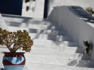 Greece, Mykonos – pot, cat and stairs, Sept.2013