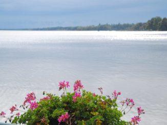 fiori-lago-balaton-ungheria