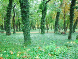 Hungary, Keszthely – green, 2010