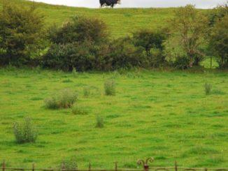 Irlanda, Cloamacnoise – croce celtica, 2011