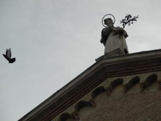 Italy, Padua – pigeon 2011