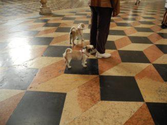 Italy, Padua – dogs 2011