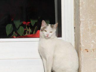 イタリア、アルベロベッロ-ドアの猫 2013年4月