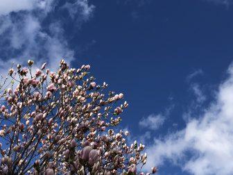 Vacanze cancellate e cielo azzurro