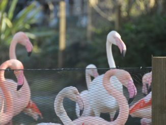 Inghilterra, Londra, Zoo – lingua, feb.2014