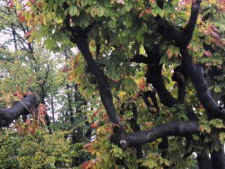 Switzerland, Lugano – leaves, Oct.2014