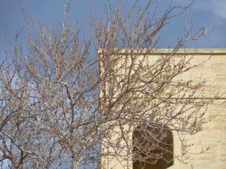 Malta, Gozo – tree and the building, Feb. 2013