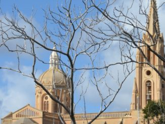 Malta, Gozo – tree and church, Feb. 2013