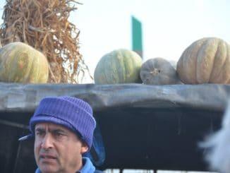 Malta, Marsaxlokk – pumpkins, Feb. 2013