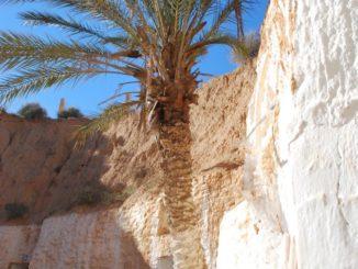 チュニジア-ローマ時代の水道跡 2008年12月
