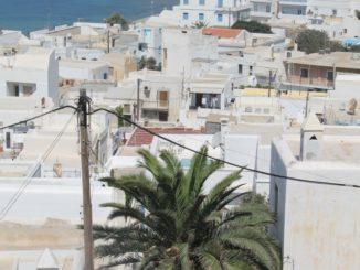 Greece, Naxos – palm tree, Aug.2013