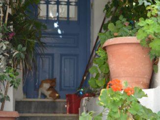 Greece, Naxos – cats at door, Aug.2013