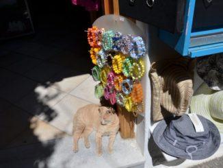 Greece, Naxos – cat at shop, Aug.2013