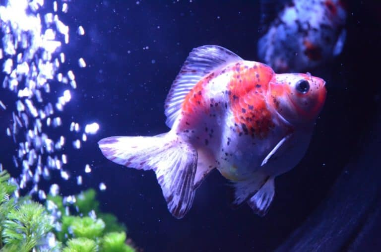 Exposición de peces de colores