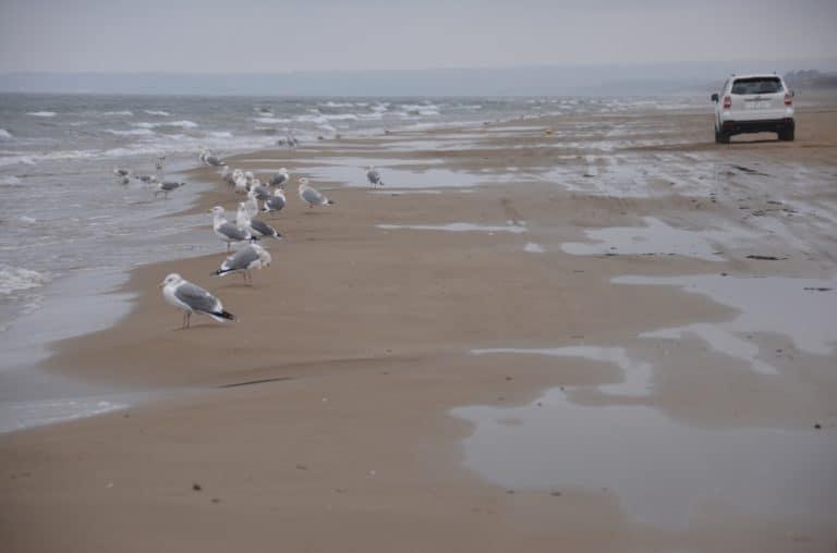 La spiaggia dove possono girare le macchine