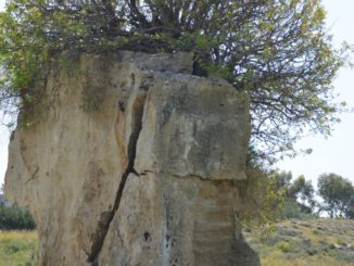 Paphos – the ruin and plant, Mar.2015