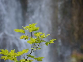 Croatia, Plitvice – leaves and waterfall, July 2014