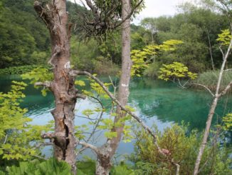 Croatia, Plitvice – trees and lake, July 2014