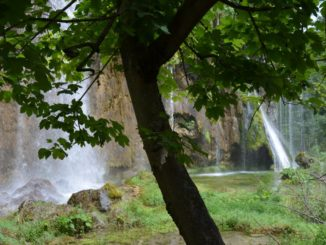Croatia, Plitvice – tree and waterfalls, July 2014