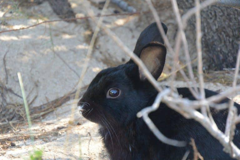 Isola dei Conigli (Rabbit Island)