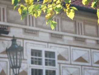 Czech, Prague – light on leaves, Sept.2013