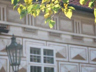 Czech, Prague – light on leaves, Sept.2013