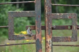 a rusty gate in Richmond Park