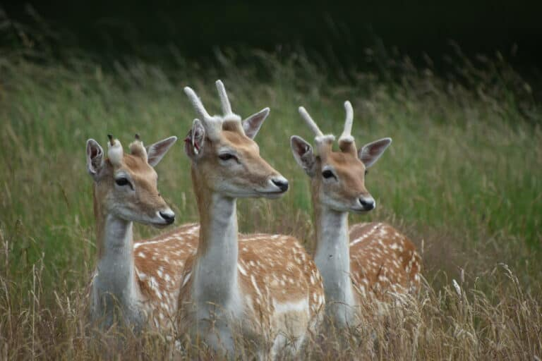 See the deer in Richmond Park