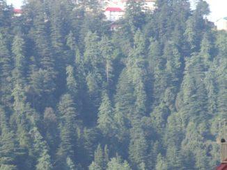 India, Shimla – house on top, Sept.2006