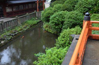 Tokyo – Nezu Shrine, pond, Aug.2016