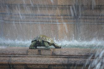Japan-Tokyo-Akasaka Palace-State Guest House-fountain-turtle