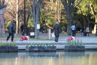 Tokyo, Ueno – statue of Saigo Takamori, Jan.2018