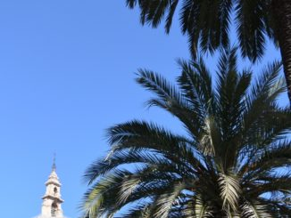town – palm trees, Feb.2016