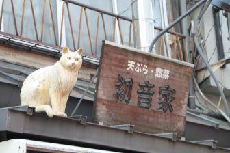 Yanaka – cat, Apr.2017